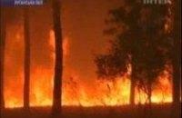 Из-за лесного пожара в Луганской области эвакуировали детский лагерь