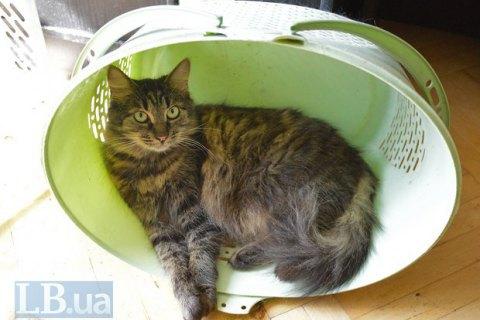 УКиєві заборонили вилов котів