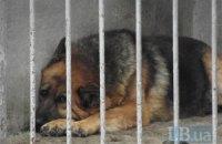 Кличко звільнив начальника притулку для тварин у Бородянці