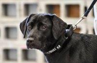 ЦРУ уволило служебную собаку из-за потери интереса к работе
