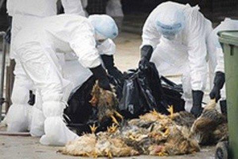 Спалах пташиного грипу зафіксований в Чернівецькій та Одеській областях