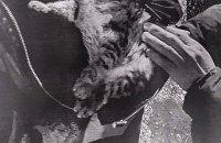 В Энергодаре мужчина забирал бездомных животных через соцсети и издевался над ними