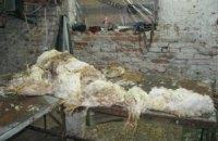 Милиция накрыла цех по переработке дохлых кур