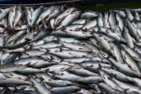 После аннексии Крыма Украина сократила вылов рыбы и других биоресурсов на 63%