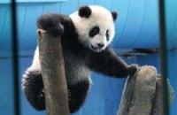 П'ятнична панда #177