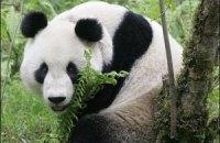 П'ятнична панда #94
