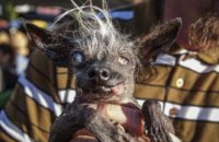 Найпотворніший пес Британії помер у 16-річному віці