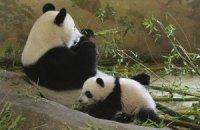 Пятничная панда #178