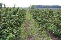 Розвиток органічного землеробства: нові робочі місця та достойна оплата праці