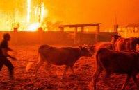 Десятки человек погибли из-за лесных пожаров в Испании и Португалии