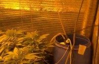 У Київській області чоловік у підвалі виростив марихуани на мільйон гривень