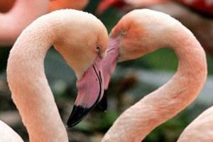 Розовый фламинго нарушил работу манчестерского аэропорта