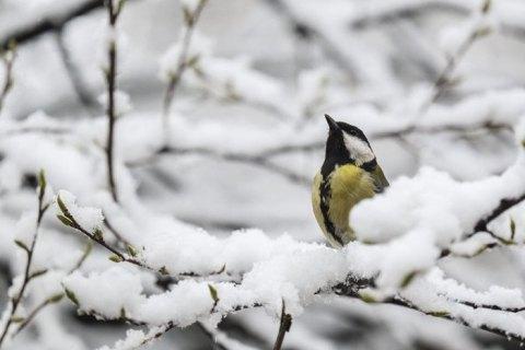 На Рождество в Украине сохранится аномально теплая погода