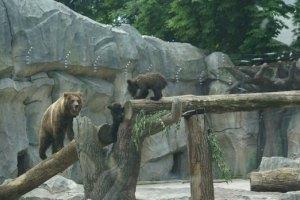 У Київському зоопарку обрали імена для новонароджених ведмежат