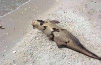 В Одесской области на побережье обнаружены десятки мертвых дельфинов