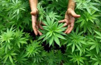 У Польщі дозволили використання марихуани в медичних цілях