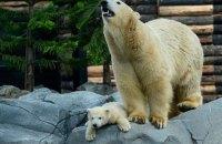 В Николаевском зоопарке родился белый медвежонок