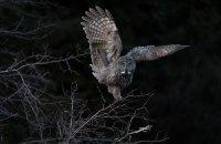 Американські орнітологи оголосили переможців конкурсу на найкращу фотографію птахів