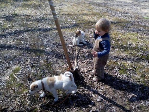 Ребенок гуляет со щенками из Песков