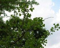 Днепропетровские ЖЭКи обяжут заключать договоры на снос деревьев