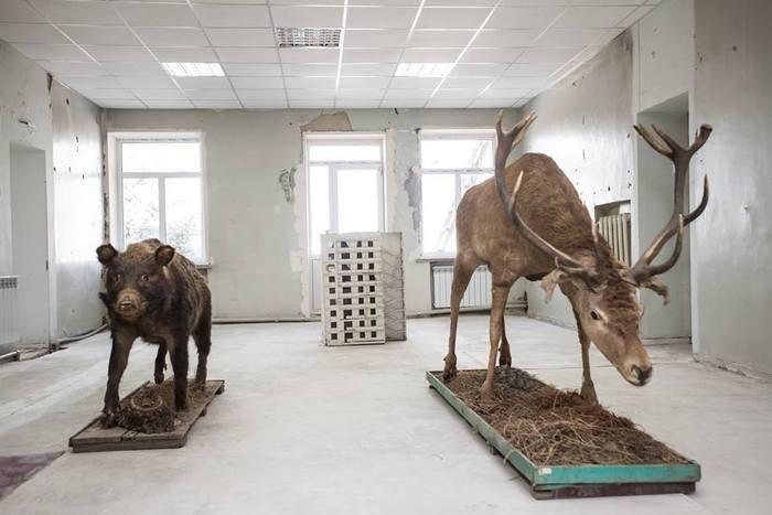 Первый зал выставки: чучела кабана и оленя, и макет девятиэтажки из списанных экспонатов Луганского краеведческого музея.