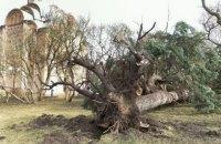 У Чернігові ураган виривав з корінням дерева і зносив дахи