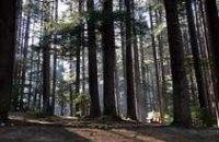 В Днепропетровской области наказали 600 человек за попытку войти в лес