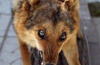 В Николаевской области после укуса собаки от бешенства умер мужчина