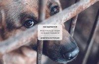 Правоохоронці нагадали алгоритм дій для свідків жорстокого поводження з тваринами