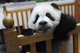 """Пятничная панда"" меняет концепцию"