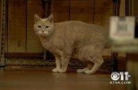 Умер кот, 19 лет возглавлявший город на Аляске