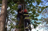 В Ровенской области спасатели сняли с дерева мужчину, который полез за котом, но не смог спуститься