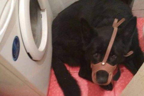 У Львові жінка нацькувала собаку на поліцейських, які прибули за її викликом