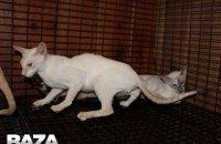 """Две кошки погибли в самолете """"Аэрофлота"""" при перелете из Нью-Йорка в Москву"""