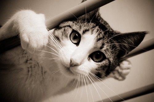 Кіт Шелдон, названий на честь однойменного героя серіалу <<Теорія великого вибуху>>, теж від M.@.x.i.m.k.a