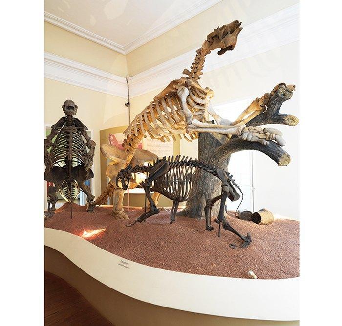 Скелеты, воспроизводящие сценарий из бразильского плейстоцена