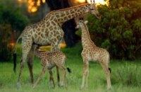 Животные крымского сафари-парка выбрались на волю