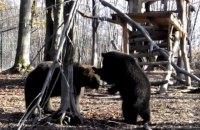На Прикарпатье из-за теплой погоды медведи не впадают в спячку