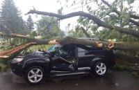 Из-за падения дерева около Стрыя в больницу попали двое людей