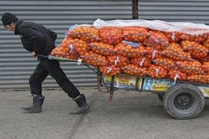 Абхазия резко сократила поставки мандаринов в Россию