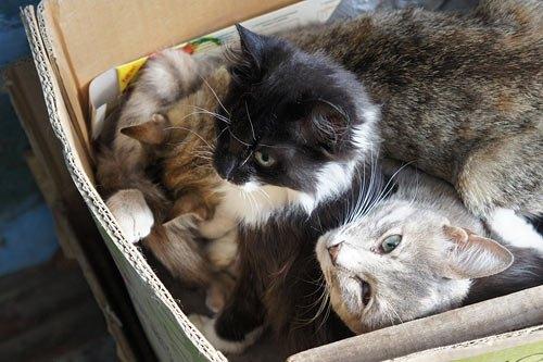 <<...И котэ которые живут у нас в подъезде попали под руку))>>