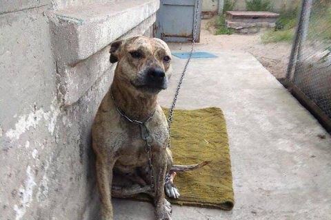 Заместительница Малюськи приобрела конфискованную собаку, которую продавали на электронных торгах СЕТАМ