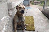 Заступниця Малюськи придбала конфісковану собаку, яку продавали на електронних торгах СЕТАМ