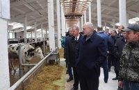 """Лукашенко уволил губернатора Могилевской области из-за """"обосранных"""" коров"""