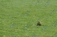 Перед Евро-2012 на гданьской арене поменяют газон