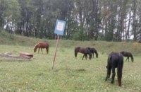 На территории базы боеприпасов в Житомирской области гуляют дикие звери и выпасают скот