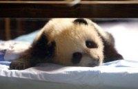 Пятничная панда #169