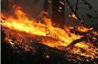 У Луганській області через обстріли згоріло 15 гектарів соснового лісу