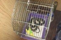 Жительница Николаева обнаружила на балконе змею, которая заползла в клетку с попугаем
