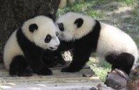 П'ятнична панда #96
